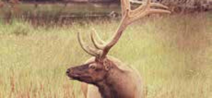 Total bosses visit PNG to talk Elk-Antelope