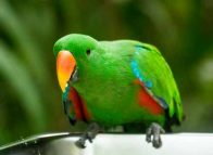 PNG launches bird watching guide