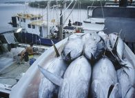 EU lifts tuna yellow card