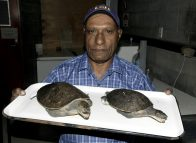 Researchers identify freshwater turtle species