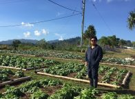 Permaculture project feeding Lihir miners